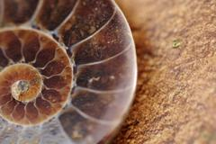 Sacred Geometry - Spiral in Ammonite